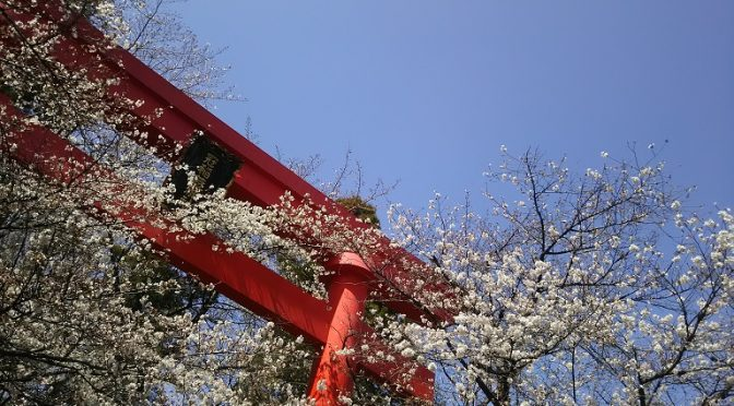 春爛漫♪本日、お花見日和でした。