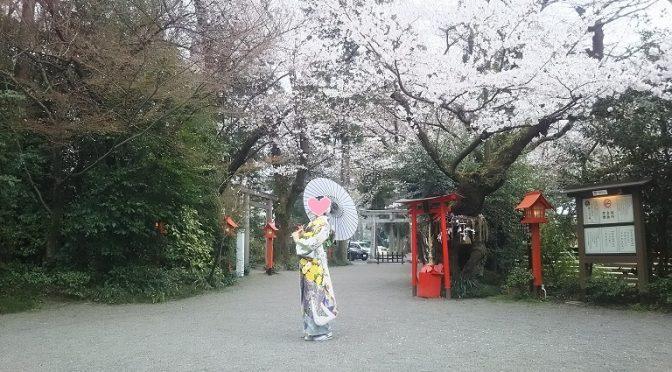 満開の桜の下、ロケーション・フォト撮影はいかがでしょう♪