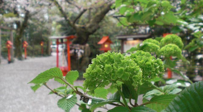 桜の季節から新緑の季節へ♪