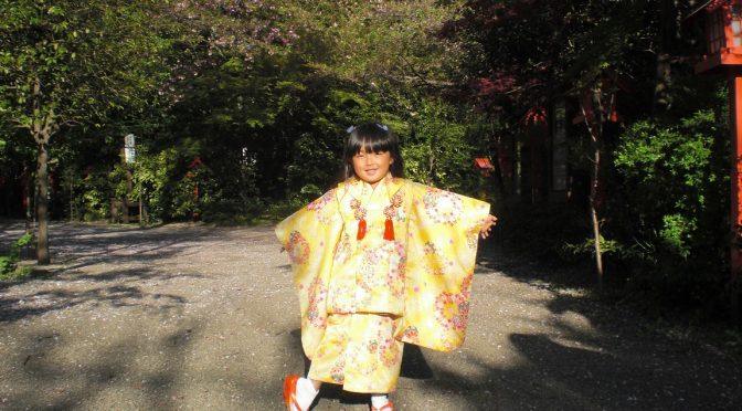 桜の絨毯の上で遊ぶ可愛い女の子に出会いました♪