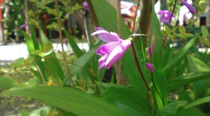 紫蘭やタンポポ…足元の小さなお花にもご注目ください♪