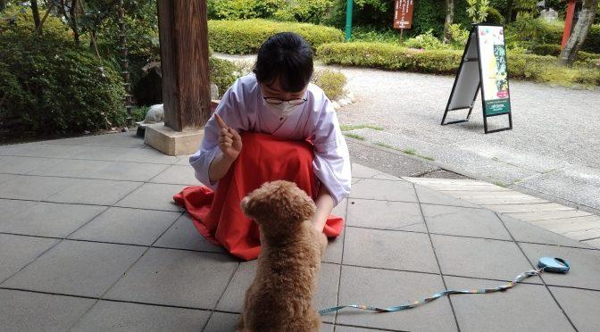 我らがアイドル犬、チャロちゃん。本日もお参りに来てくれました♪